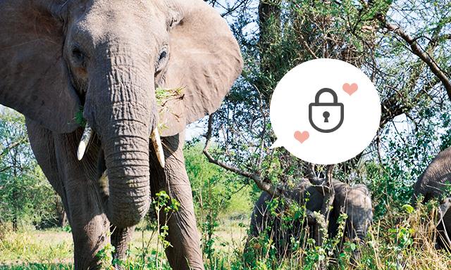 MAMPのセキュリティ設定-外部からのアクセスを防ぐ