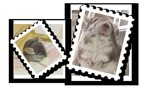 【その他】令和元年なので平成元年切手の紹介